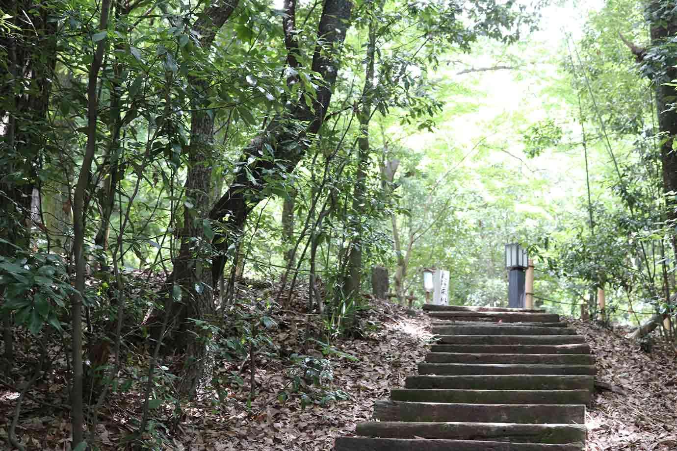 緑のカーテンに包まれているような、木々のトンネル。気持ちよい木漏れ日を浴びながら、山頂へ