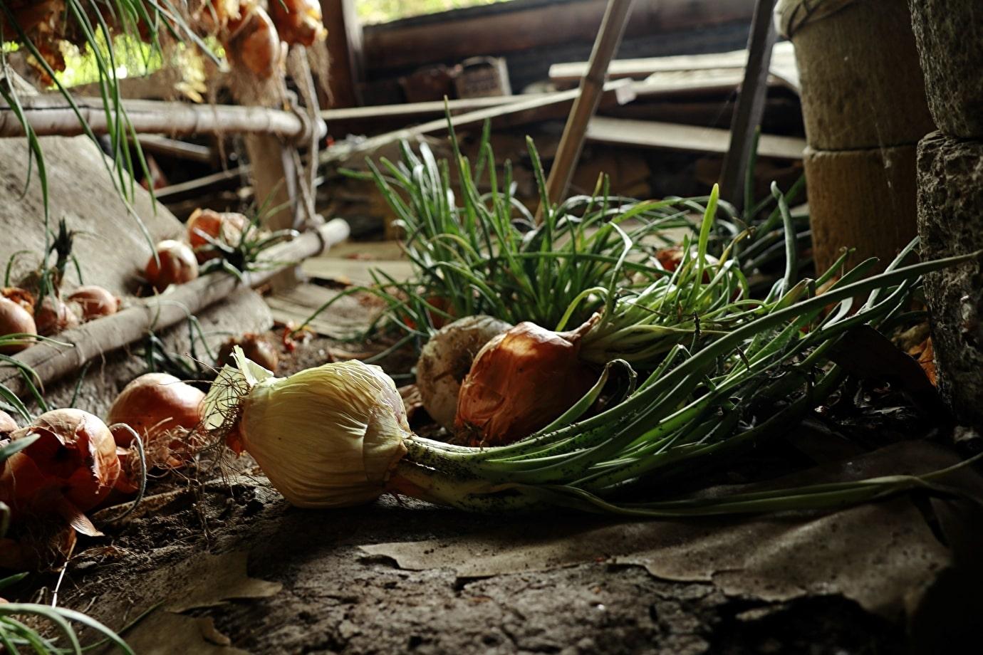 世界中で、まだ食べられる食品が毎日捨てられています