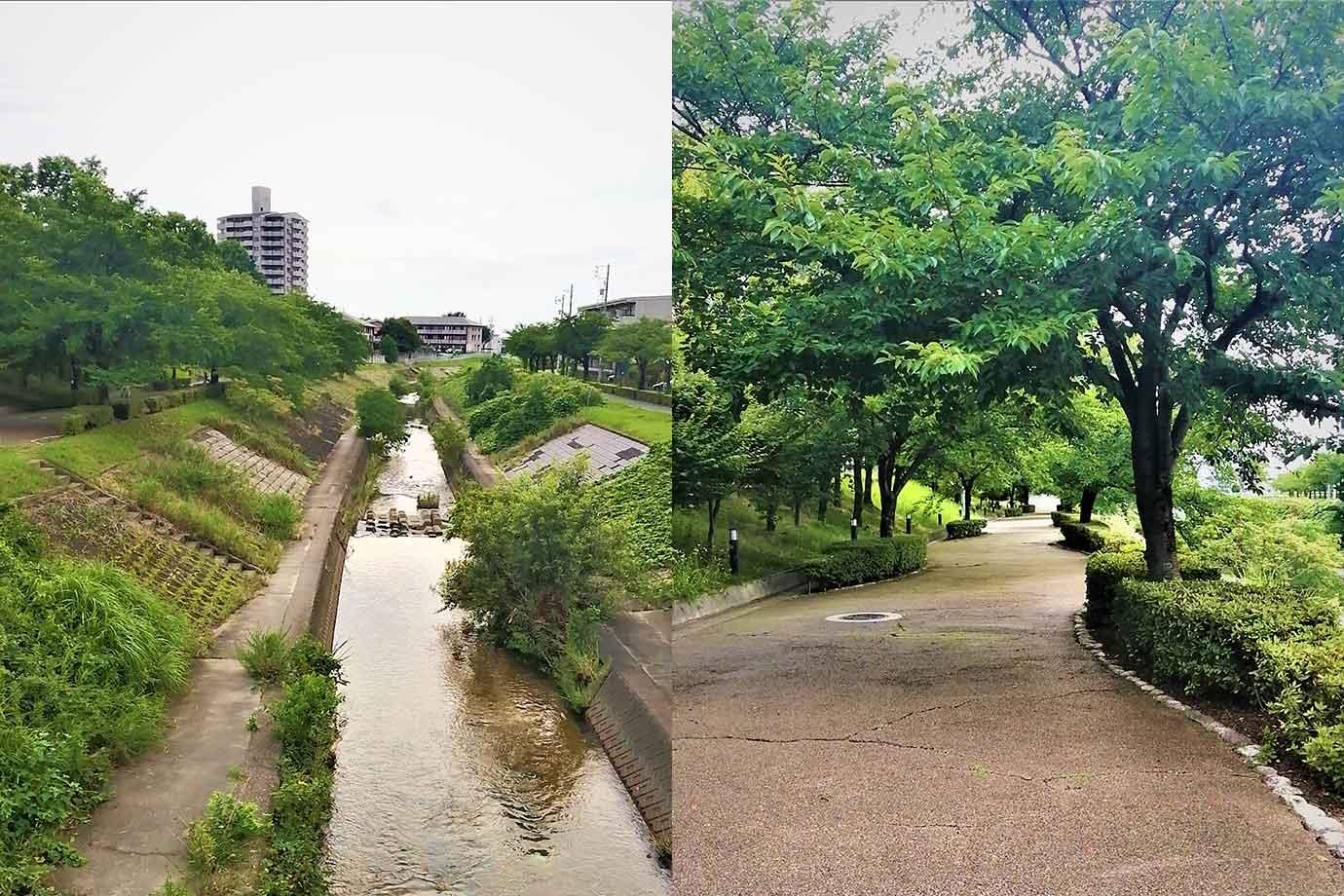 文化の家の北側には香流川が流れ、運が良ければこの時期、鴨の親子連れを見られるかも…、香流川沿いの緑道は 素敵なお散歩コース、秋は落ち葉が敷き詰められ、春には見事な桜のトンネルが出現します。