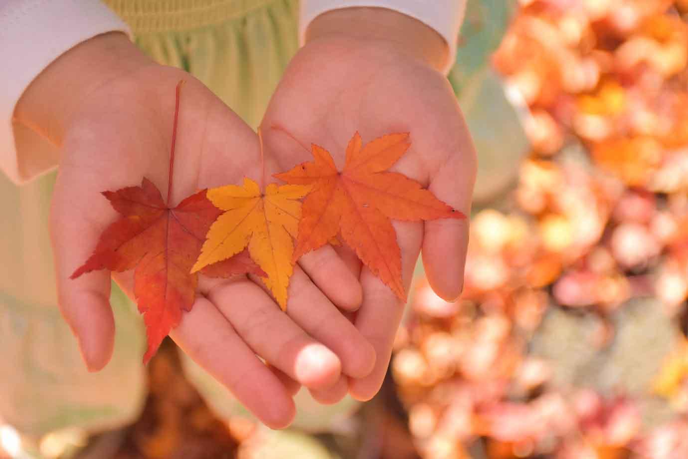 夏に症状が出る「夏バテ」に対して、秋になり涼しく過ごしやすくなってきたにもかかわらず不調が続くのが「秋バテ」。特徴は夏バテに似ていて、「秋バテ」は現代病とも言えます